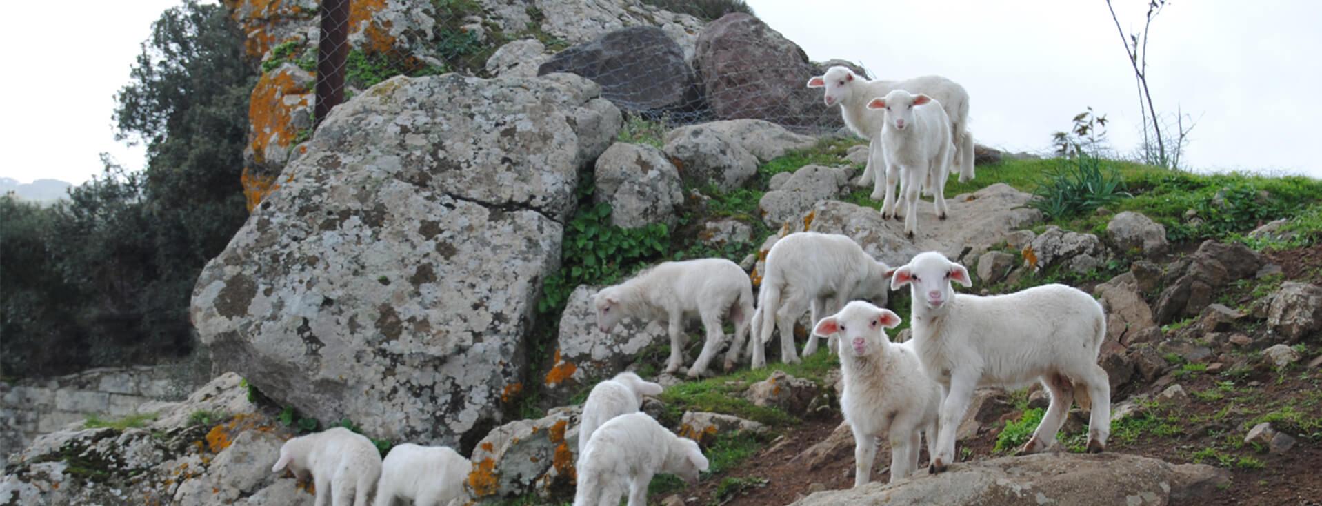 Agriturismo Ruspina in Nulvi